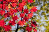 1600772050_autumn-leaves-2789234_1280.jpg