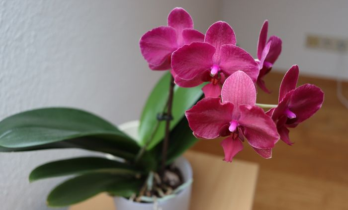 1614247612_orchid-in-the-house-4937764_1280.jpg