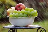 1620119688_bowl-of-fruit-in-rain-4125348_1280.jpg